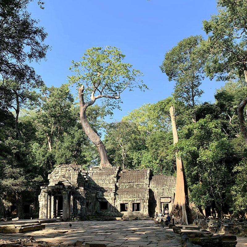 ta prohm temple cambodge